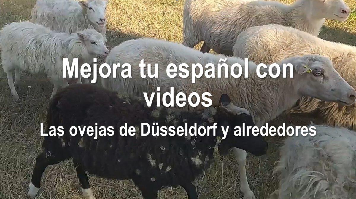 Mejora tu español con videos: Las ovejas de Düsseldorf y alrededores